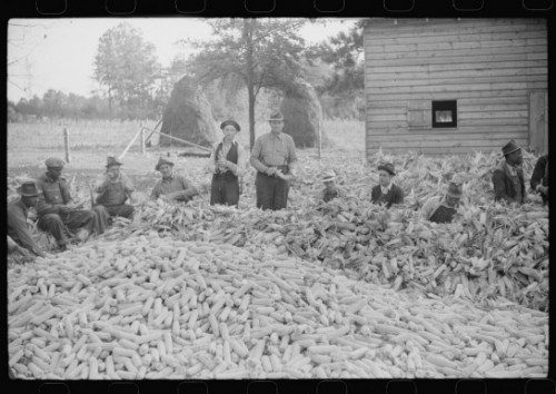 Corn shucking on farm near the Fred Wilkins place, Marion Post Walcott Granville County, North Carolina 1939   <br />